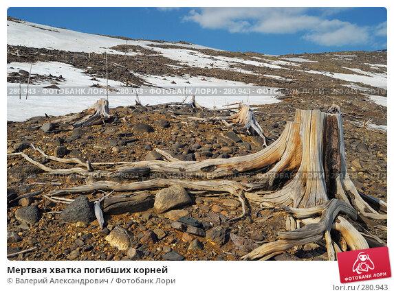 Мертвая хватка погибших корней, фото № 280943, снято 2 мая 2008 г. (c) Валерий Александрович / Фотобанк Лори