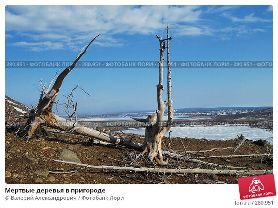 Мертвые деревья в пригороде, фото № 280951, снято 25 января 2017 г. (c) Валерий Александрович / Фотобанк Лори