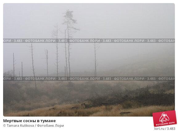 Мертвые сосны в тумане, фото № 3483, снято 26 октября 2005 г. (c) Tamara Kulikova / Фотобанк Лори