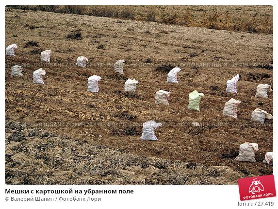Купить «Мешки с картошкой на убранном поле», фото № 27419, снято 13 ноября 2006 г. (c) Валерий Шанин / Фотобанк Лори