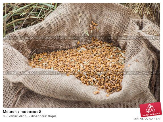 Купить «Мешок с пшеницей», фото № 27029171, снято 26 августа 2017 г. (c) Литвяк Игорь / Фотобанк Лори