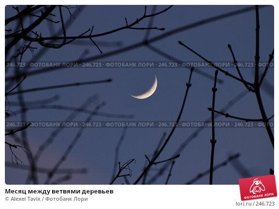 Купить «Месяц между ветвями деревьев», эксклюзивное фото № 246723, снято 9 апреля 2008 г. (c) Alexei Tavix / Фотобанк Лори