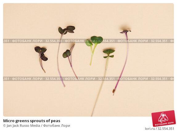 Купить «Micro greens sprouts of peas», фото № 32554351, снято 27 ноября 2019 г. (c) Jan Jack Russo Media / Фотобанк Лори