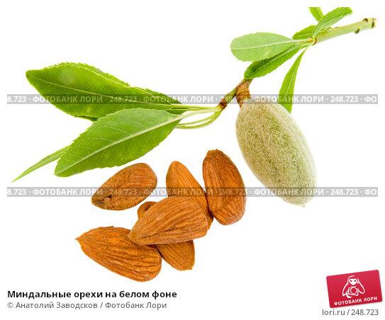 Купить «Миндальные орехи на белом фоне», фото № 248723, снято 14 мая 2007 г. (c) Анатолий Заводсков / Фотобанк Лори