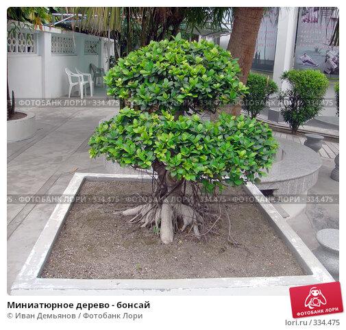 Миниатюрное дерево - бонсай, фото № 334475, снято 18 мая 2008 г. (c) Иван Демьянов / Фотобанк Лори