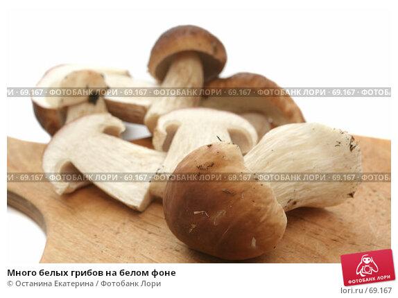 Много белых грибов на белом фоне, фото № 69167, снято 26 июля 2007 г. (c) Останина Екатерина / Фотобанк Лори