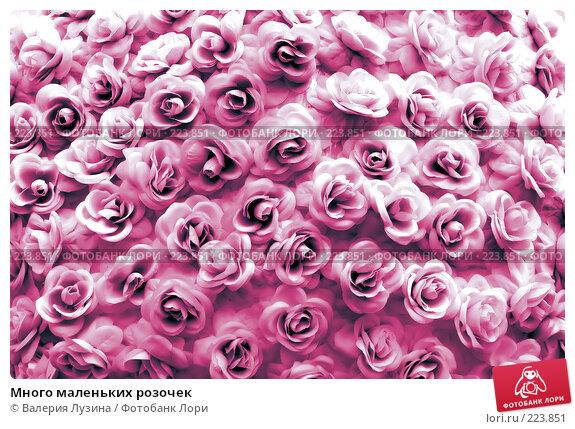 Купить «Много маленьких розочек», фото № 223851, снято 8 августа 2007 г. (c) Валерия Потапова / Фотобанк Лори