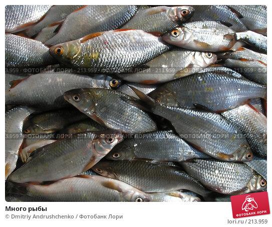 Много рыбы, фото № 213959, снято 2 февраля 2008 г. (c) Dmitriy Andrushchenko / Фотобанк Лори