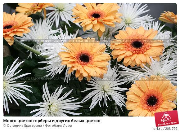 Много цветов герберы и других белых цветов, фото № 208799, снято 14 февраля 2008 г. (c) Останина Екатерина / Фотобанк Лори