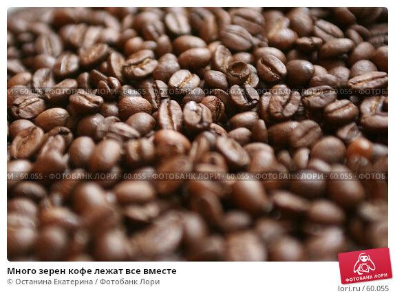 Много зерен кофе лежат все вместе, фото № 60055, снято 8 сентября 2006 г. (c) Останина Екатерина / Фотобанк Лори