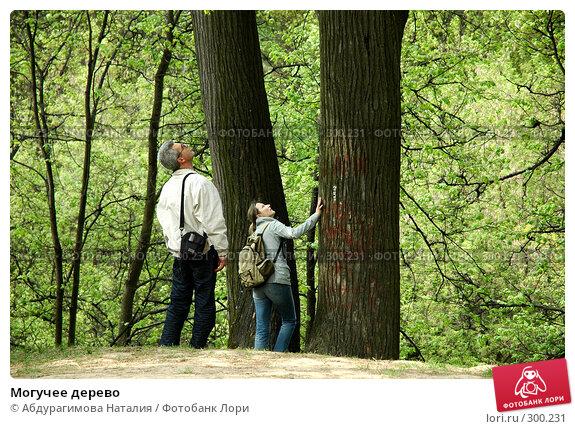 Могучее дерево, фото № 300231, снято 10 мая 2008 г. (c) Абдурагимова Наталия / Фотобанк Лори