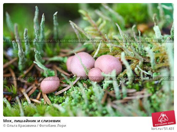Купить «Мох, лишайник и слизевик», фото № 51431, снято 8 июля 2006 г. (c) Ольга Красавина / Фотобанк Лори