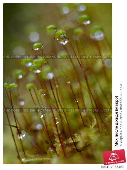 Мох после дождя (макро), фото № 153859, снято 3 сентября 2006 г. (c) Дарья Олеринская / Фотобанк Лори
