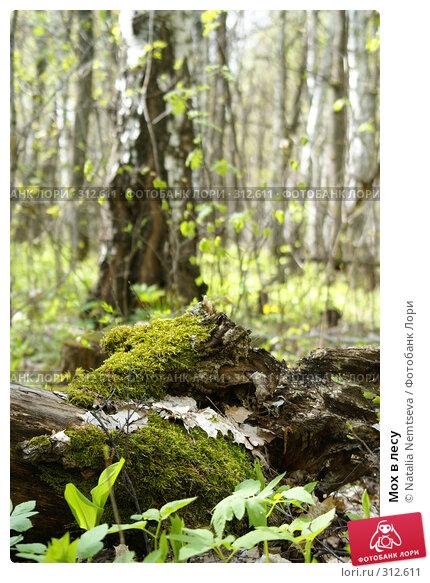 Мох в лесу, эксклюзивное фото № 312611, снято 26 апреля 2008 г. (c) Natalia Nemtseva / Фотобанк Лори