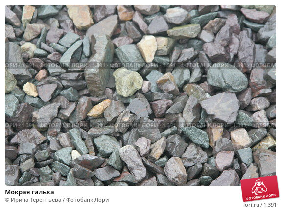 Купить «Мокрая галька», эксклюзивное фото № 1391, снято 17 сентября 2005 г. (c) Ирина Терентьева / Фотобанк Лори