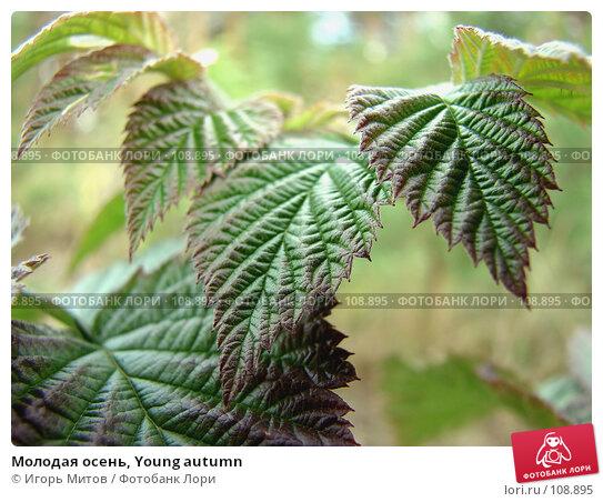 Купить «Молодая осень, Young autumn», фото № 108895, снято 24 апреля 2018 г. (c) Игорь Митов / Фотобанк Лори