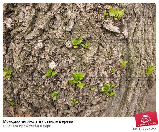 Молодая поросль на стволе дерева, фото № 273235, снято 1 мая 2008 г. (c) Заноза-Ру / Фотобанк Лори