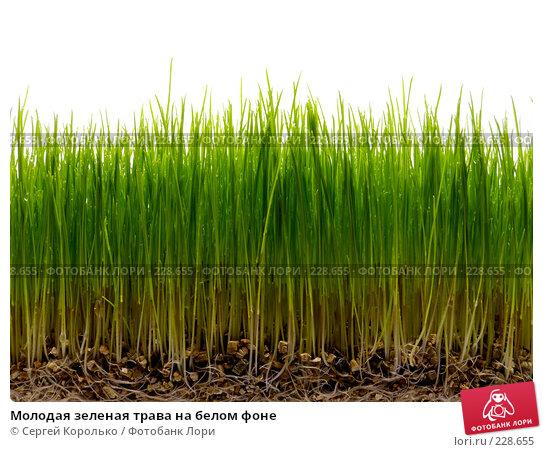 Молодая зеленая трава на белом фоне, фото № 228655, снято 26 июля 2017 г. (c) Сергей Королько / Фотобанк Лори