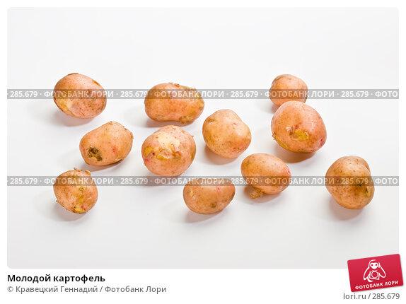 Купить «Молодой картофель», фото № 285679, снято 17 июля 2005 г. (c) Кравецкий Геннадий / Фотобанк Лори