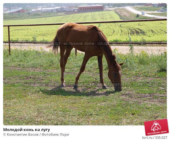 Молодой конь на лугу, фото № 335027, снято 23 мая 2017 г. (c) Константин Босов / Фотобанк Лори