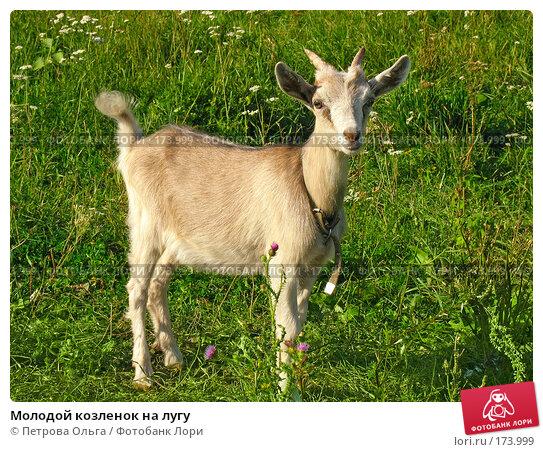 Молодой козленок на лугу, фото № 173999, снято 12 августа 2007 г. (c) Петрова Ольга / Фотобанк Лори