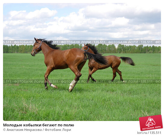 Молодые кобылки бегают по полю, фото № 135511, снято 22 мая 2006 г. (c) Анастасия Некрасова / Фотобанк Лори