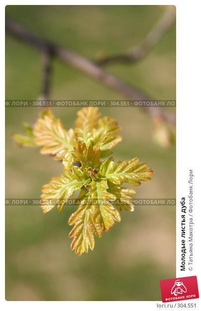 Купить «Молодые листья дуба», фото № 304551, снято 29 апреля 2008 г. (c) Татьяна Макотра / Фотобанк Лори