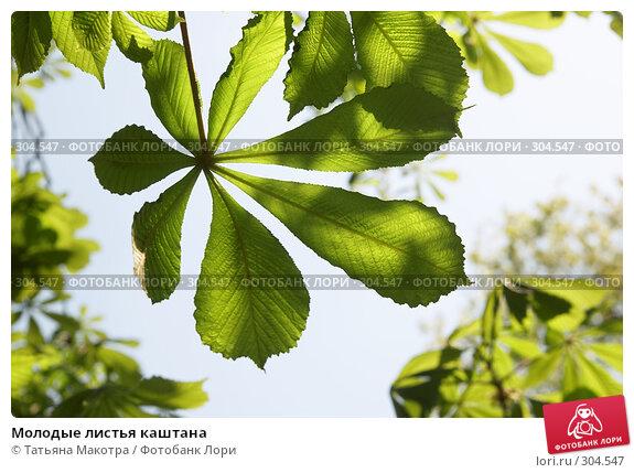 Молодые листья каштана, фото № 304547, снято 29 апреля 2008 г. (c) Татьяна Макотра / Фотобанк Лори