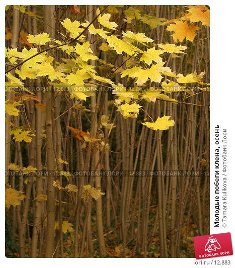 Молодые побеги клена, осень, фото № 12883, снято 13 ноября 2006 г. (c) Tamara Kulikova / Фотобанк Лори