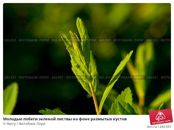 Молодые побеги зеленой листвы на фоне размытых кустов, фото № 243551, снято 2 июня 2007 г. (c) Harry / Фотобанк Лори