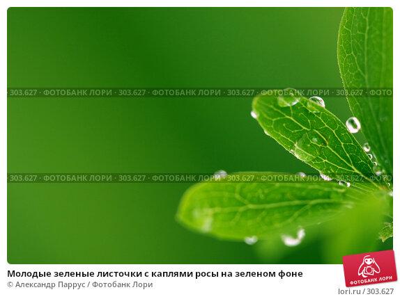 Молодые зеленые листочки с каплями росы на зеленом фоне, фото № 303627, снято 21 апреля 2008 г. (c) Александр Паррус / Фотобанк Лори