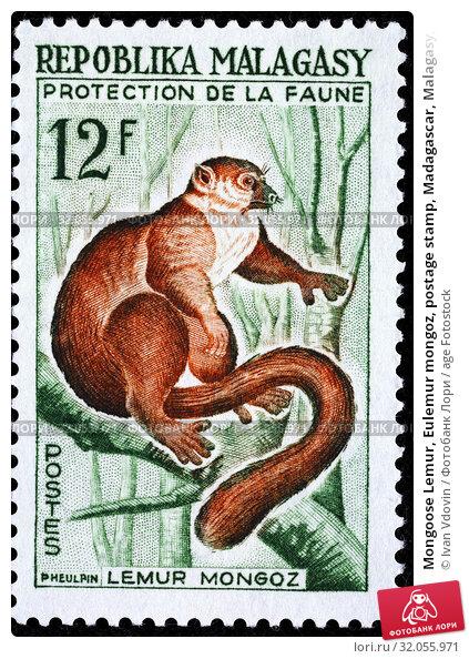Mongoose Lemur, Eulemur mongoz, postage stamp, Madagascar, Malagasy, 1961. (2013 год). Редакционное фото, фотограф Ivan Vdovin / age Fotostock / Фотобанк Лори