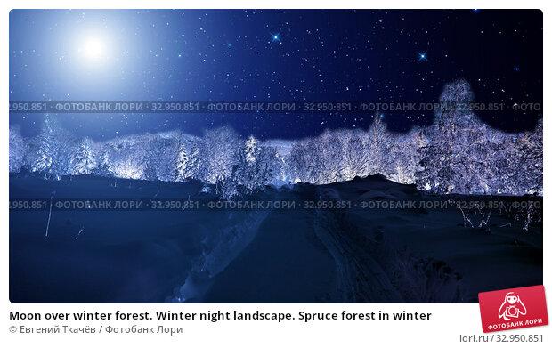 Moon over winter forest. Winter night landscape. Spruce forest in winter. Стоковое фото, фотограф Евгений Ткачёв / Фотобанк Лори