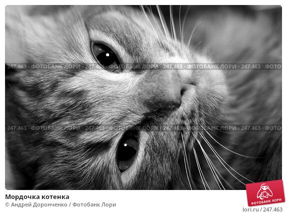 Мордочка котенка, фото № 247463, снято 17 февраля 2007 г. (c) Андрей Доронченко / Фотобанк Лори