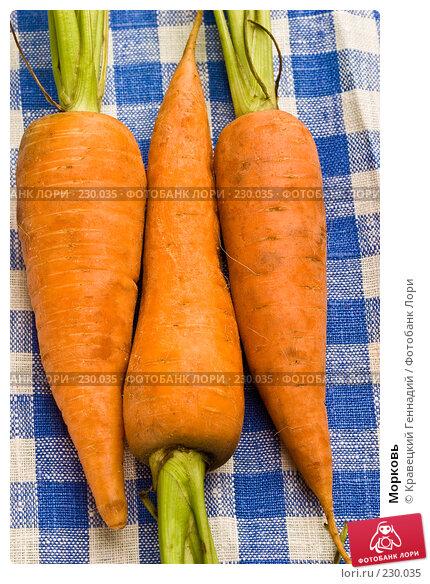 Морковь, фото № 230035, снято 18 июля 2005 г. (c) Кравецкий Геннадий / Фотобанк Лори