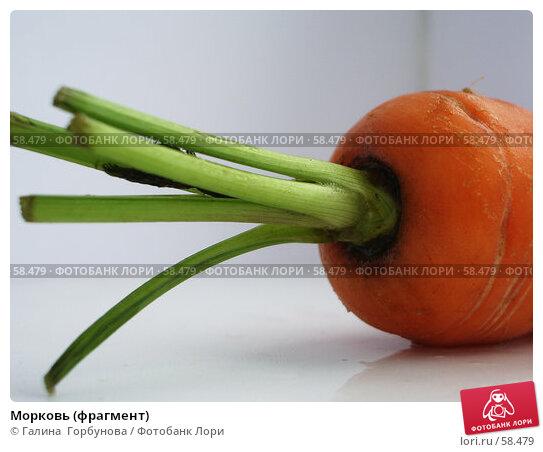 Морковь (фрагмент), фото № 58479, снято 21 июня 2006 г. (c) Галина  Горбунова / Фотобанк Лори
