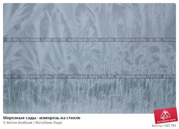 Морозные сады - изморозь на стекле, фото № 167791, снято 6 января 2008 г. (c) Антон Алябьев / Фотобанк Лори
