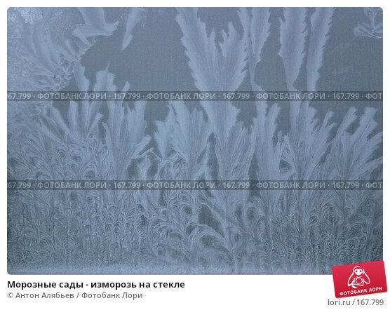 Морозные сады - изморозь на стекле, фото № 167799, снято 6 января 2008 г. (c) Антон Алябьев / Фотобанк Лори