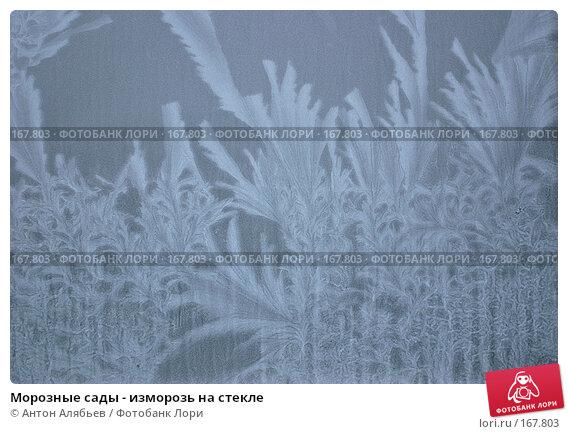 Морозные сады - изморозь на стекле, фото № 167803, снято 6 января 2008 г. (c) Антон Алябьев / Фотобанк Лори