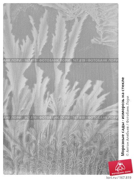 Купить «Морозные сады - изморозь на стекле», фото № 167819, снято 6 января 2008 г. (c) Антон Алябьев / Фотобанк Лори