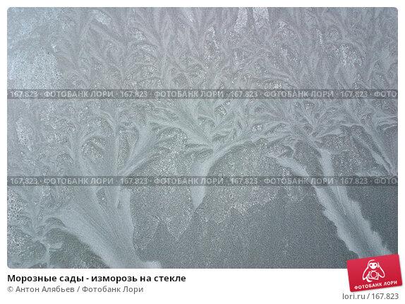 Морозные сады - изморозь на стекле, фото № 167823, снято 6 января 2008 г. (c) Антон Алябьев / Фотобанк Лори