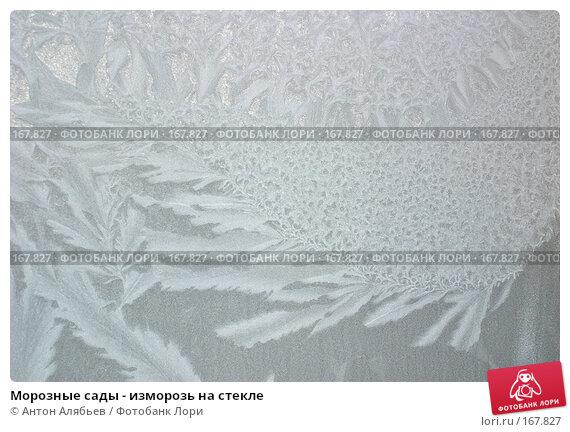 Морозные сады - изморозь на стекле, фото № 167827, снято 6 января 2008 г. (c) Антон Алябьев / Фотобанк Лори