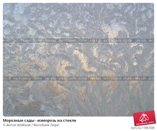 Морозные сады - изморозь на стекле, фото № 199939, снято 3 января 2008 г. (c) Антон Алябьев / Фотобанк Лори
