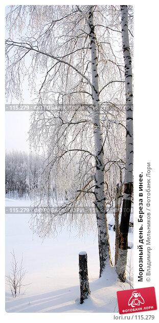Морозный день. Береза в инее., фото № 115279, снято 25 марта 2017 г. (c) Владимир Мельников / Фотобанк Лори