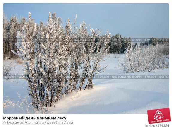 Морозный день в зимнем лесу, фото № 179891, снято 16 января 2008 г. (c) Владимир Мельников / Фотобанк Лори