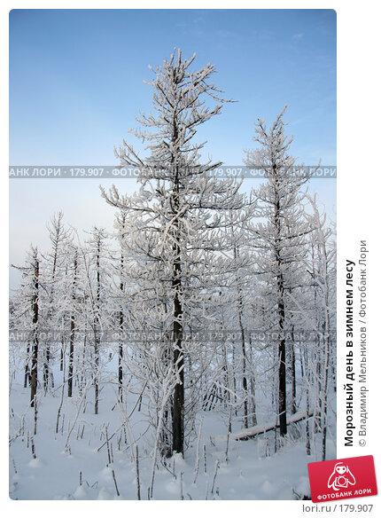 Морозный день в зимнем лесу, фото № 179907, снято 16 января 2008 г. (c) Владимир Мельников / Фотобанк Лори