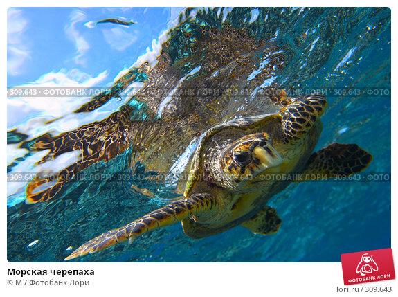 Морская черепаха, фото № 309643, снято 22 мая 2017 г. (c) Михаил / Фотобанк Лори