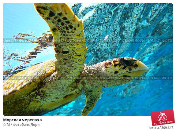 Морская черепаха, фото № 309647, снято 30 марта 2017 г. (c) Михаил / Фотобанк Лори