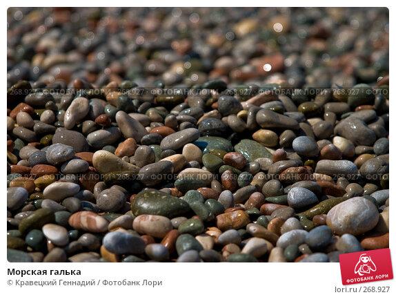 Морская галька, фото № 268927, снято 2 июля 2004 г. (c) Кравецкий Геннадий / Фотобанк Лори