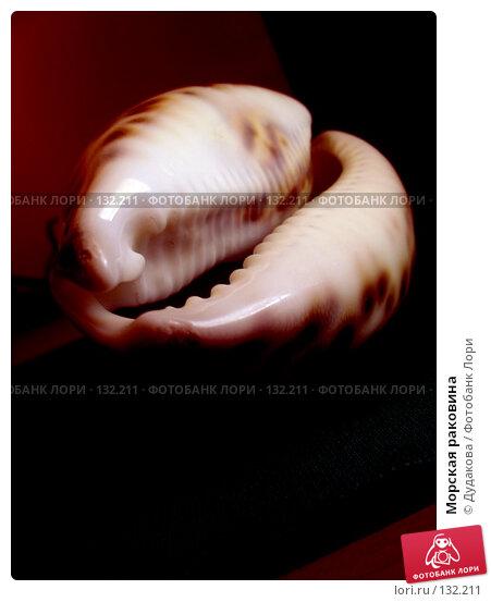 Морская раковина, фото № 132211, снято 21 февраля 2005 г. (c) Дудакова / Фотобанк Лори